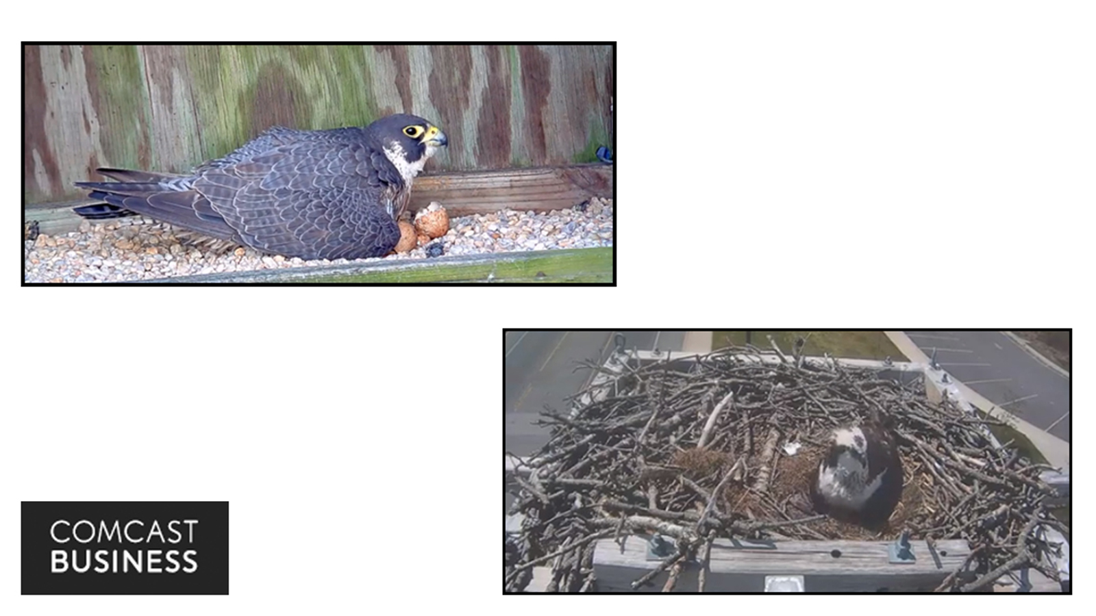 Join Us In Hatch Watch On Our Bird Cams In Richmond Va And Severna Park Md
